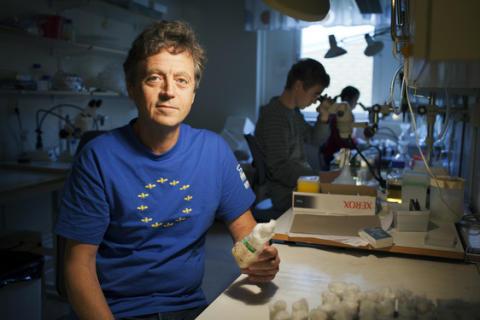 Dan Hultmark, Institutionen för molekylärbiologi, Umeå universitet