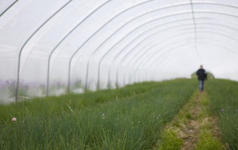 Med stor respekt för råvaran hanterar SydGrönt frukt och grönt utifrån varje produkts specifika behov.