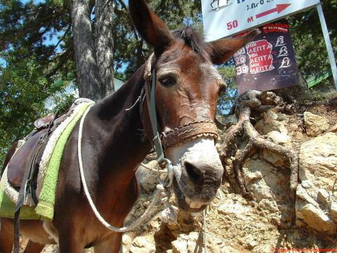 Aasien vanhainkoti Kyproksella muuttaa uusille laidunmaille