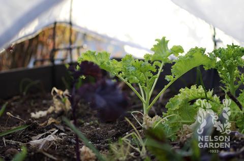 Skydda dina plantor från frost