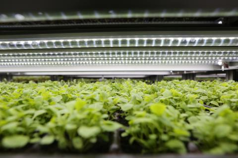 LED-grown crops, the new age of sustainable farming