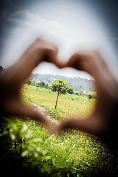 Fem miljoner nya träd i Vi-skogen