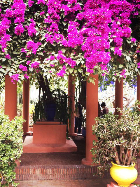 Marrakech Garden Inspirations