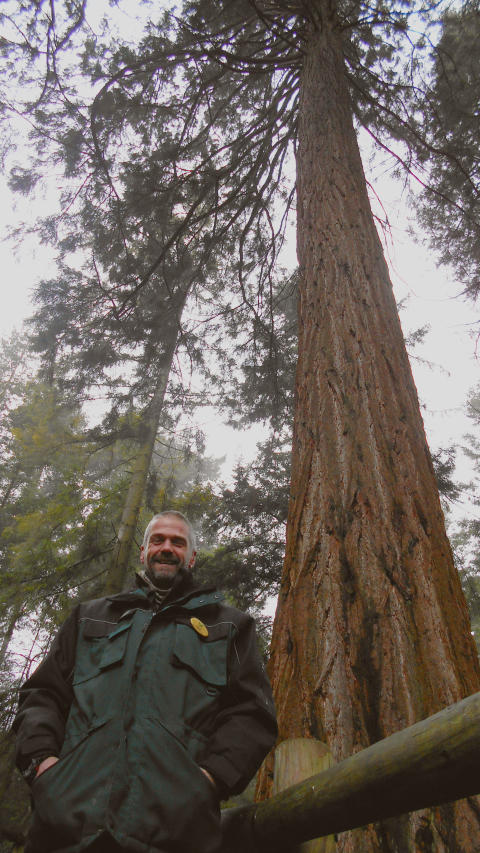 Center Parcs home to UK's tallest Giant Redwood