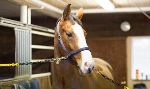 Visitera hästen regelbundet