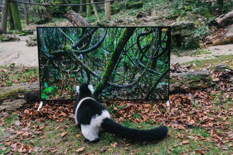 Sony4K_Lemur_ _Zoo2b
