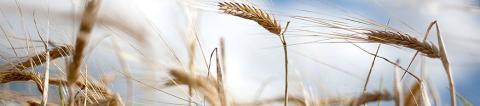 Mark- och miljödomstolen gav lantbrukare rätt