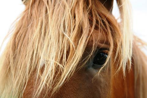 Så blir Sveriges hästbajs en resurs för bönderna