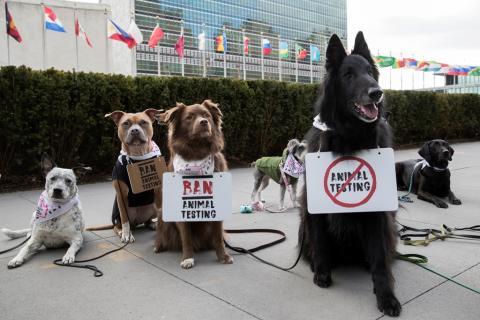 Hunde indtager i dag gaderne i verdens første FN dyredemonstration