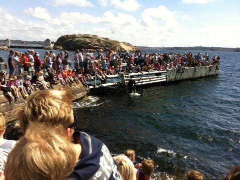 Hajsläpp utanför Havets Hus måndag 5 augusti kl 14.30