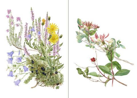 Pressinbjudan: Blomstrande vernissage på naturum Dalarna
