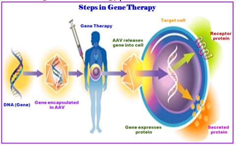 Gene Therapy Market to Witness Huge Growth - Sangamo Therapeutics, Inc., bluebird bio, Inc., uniQure N.V., AveXis, Vineti, Solid Biosciences.,