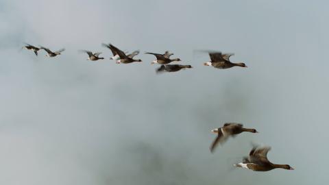 Spread Your Wings Nicolas Vanier Still011