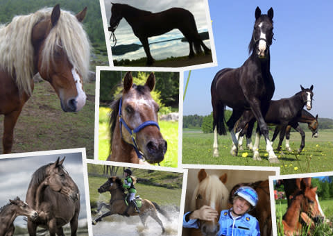 Möt Horses made in Sweden i Göteborg