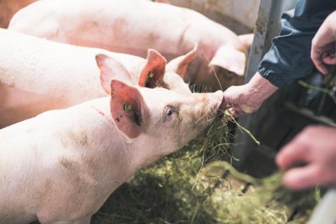 Atrian Perhetilan antibioottivapaa possun liha nyt kaupoissa