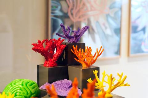 Korallrevsforskning tolkas av Beckmansstudenter