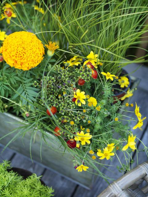 Tropikerna - färgglada blommor.