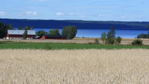 Vatten och mark för klimatanpassad livsmedelsproduktion