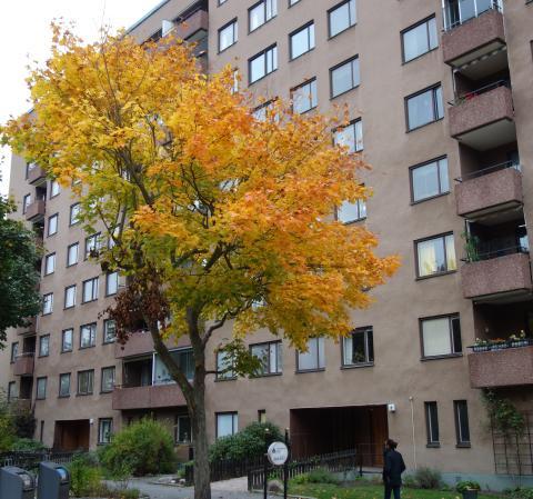 Byggmästargruppen har fått förtroendet  av Brf Arken i Hägersten att utföra stambyte i deras  60 lägenheter