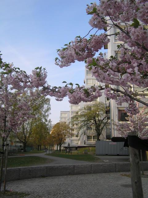 VÅR-städdag på Övre Norrby - Billdalsgatan, Bohusgatan och Östgötagatan