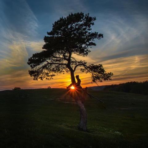 Vem blir Sveriges bästa trädfotograf?
