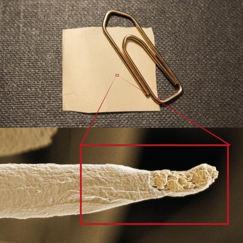 Den svagt brandgula mattan (2x2 kvadrat-cm) i övre bilden har spunnits på en roterande cylinder vilket efter att man klippt ut mattan består av cirka 200 000 tråddelar (tjocklek ca. 1 µm (nedre bild)) liggandes i en och samma riktning.