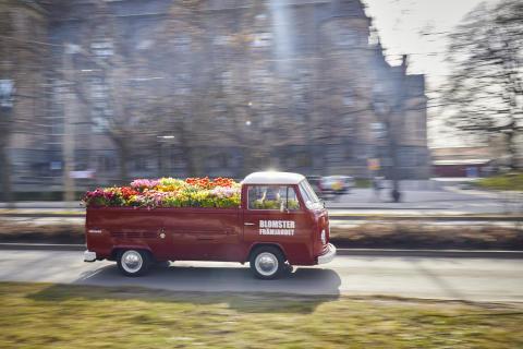 Svenskodlad blomsterglädje på Stockholms gator