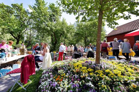 En färgsprakande trädgårdsmarknad i sommarsolen!