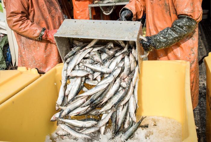 Östersjöns fiskekvoter för 2018 klara: Svaga bestånd ger sänkt kvot för laxfiske