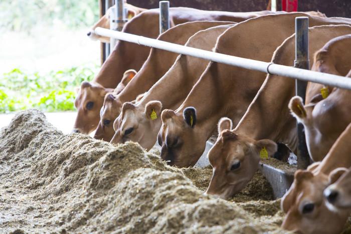 Arla schafft einen Anreiz für den Einsatz von mehr gentechnikfreien Futtermitteln