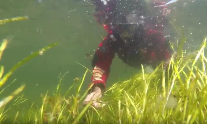 Filmer från HaV: Restaurering av värdefulla ålgräsängar på västkusten