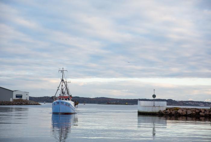 HaV inför individuell och årlig fördelning av fiskemöjligheter