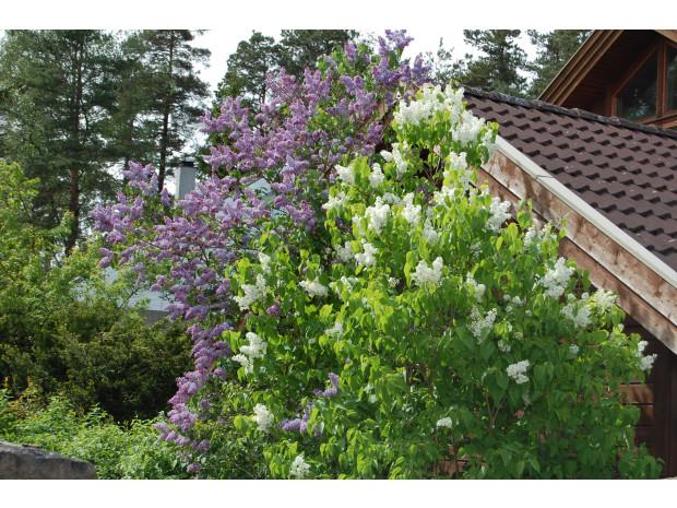 opplysningskontoret for blomster og planter