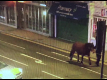Barnet officers rescuing the stray horses