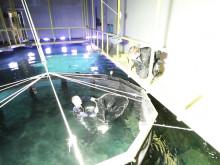 Högfenad haj släpps ner i Universeums oceantank