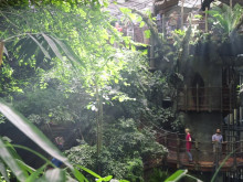 Upptäck nya Regnskogen