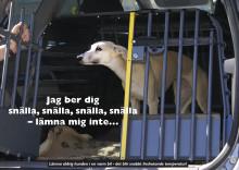 Sommaren en farofylld tid för hunden
