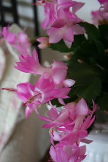 Månadens Blomma – november 2007