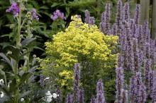 Mästarrabatten bjuder på trädgårdsinspiration