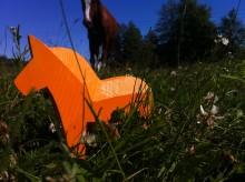 Sommarhälsning från projektet Framtidsspaning signerad  Hästnäringens Ungdomssatsning