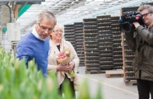 Sveriges första klimatkompenserade tulpaner visar vägen för framtidens blommor