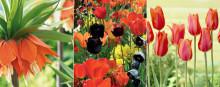 Stockholm välkomnar våren i varma toner