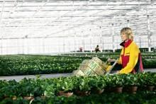 DHL leverer grøn logistik til Danmarks EU-formandskab