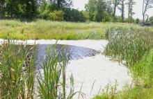 Våtmarker allt effektivare mot övergödning