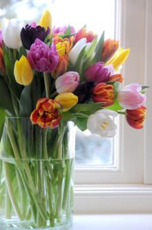 Vårens tulpaner 2009
