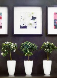 Azalea med sigill – en dubbel gåva som stödjer Victoriafonden