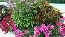 Recept på en lyckad plantering juni