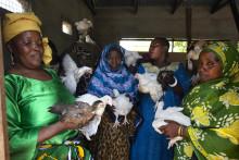 Knäck fattigdom i påsk med unika påskägg