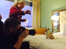 Succéstoryn om Happy Dog - Clarion Hotel Arlanda Airports nyårsfirande för hundar