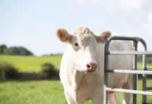 Sveland Djurförsäkringar har tecknat avtal med Gjensidige